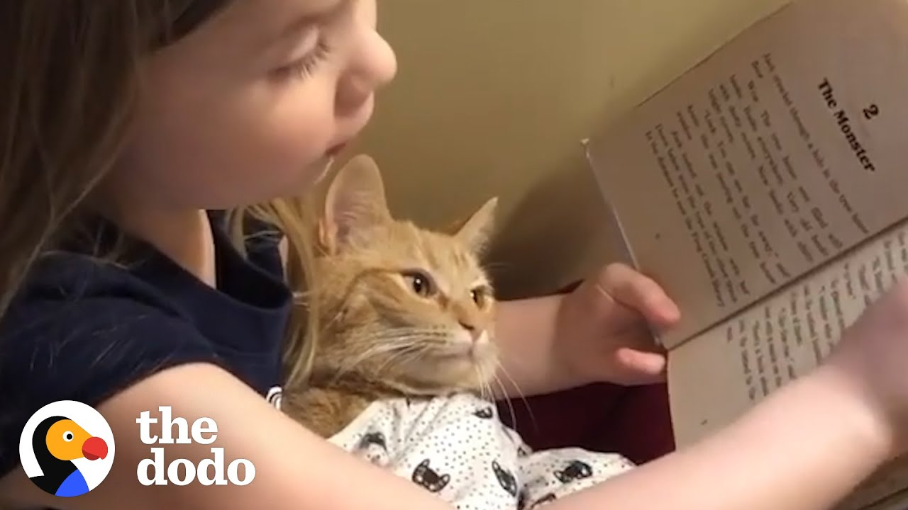 Cat Helps Her Sisters Learn From Home | The Dodo