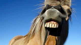 Девушка ржет как конь! ПРИКОЛ! ЖЕСТЬ!