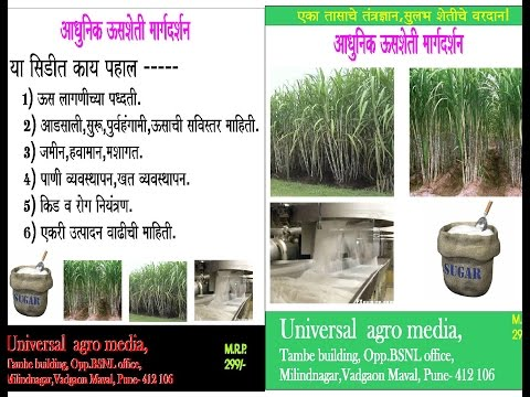 Sugarcane - आधुनिक ऊस मार्गदर्शन