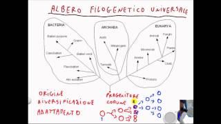 CORSO DI BIOLOGIA GENERALE - LEZIONE 3 - ALBERO FILOGENETICO UNIVERSALE