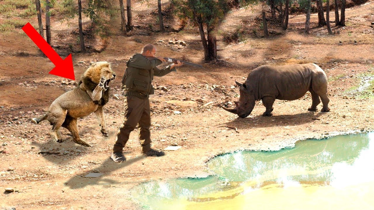 Unbelievable Animals SAVING Other Animals!