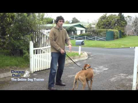 Training your dog to walk on the leash - The Online Dog Trainer