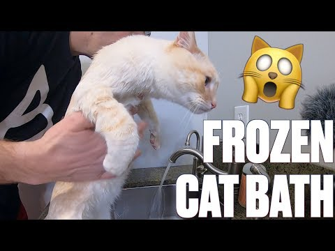 MIRACLE FROZEN KITTEN GETS A WARM BATH | HOW TO GIVE A CAT A BATH WITHOUT GETTING CLAWED
