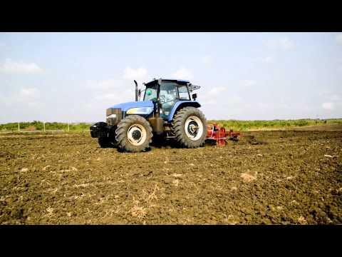 ghana yam farm short