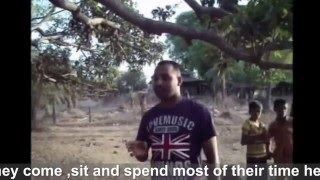 The Walking Mango Tree - Chalto Ambo
