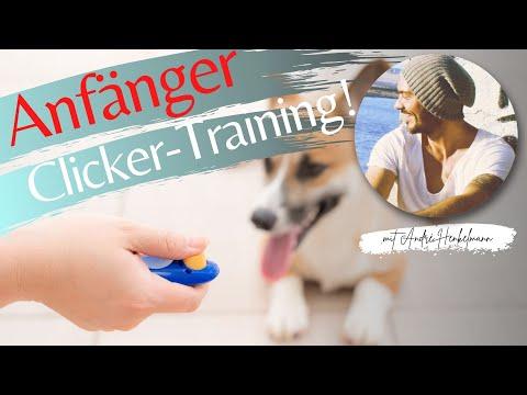 Clickertraining für Anfänger - Profi-Tipps!