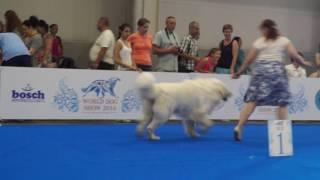 WDS 4382 ARDON (пиренейская горная собака)