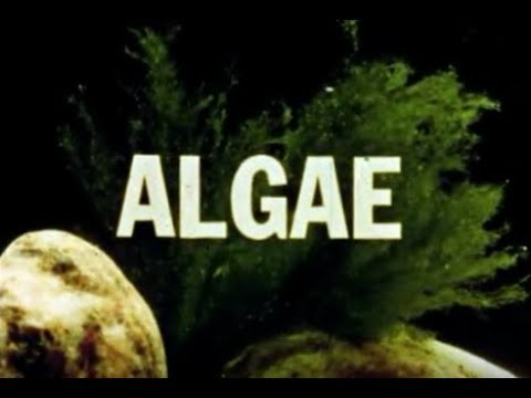 What is Algae?  Development, Types, Ecological Role