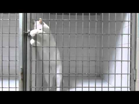 Marshmallow the cat escapes from the vet