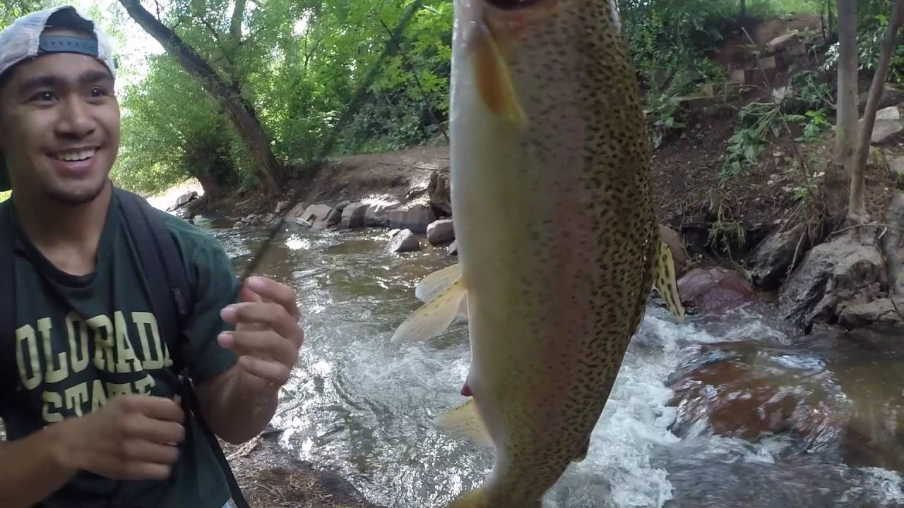 This dj gone fishing for monster rainbow trout in colorado for Fish store colorado springs