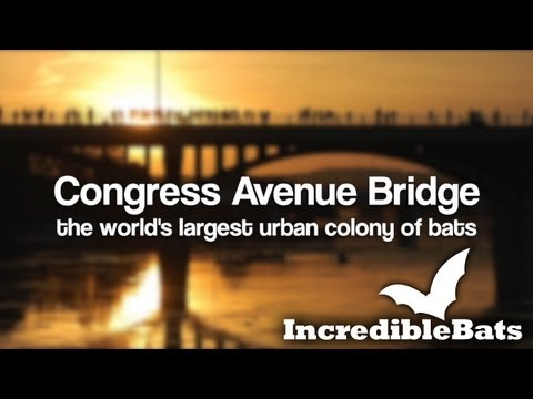 Incredible Bats at Congress Avenue Bridge