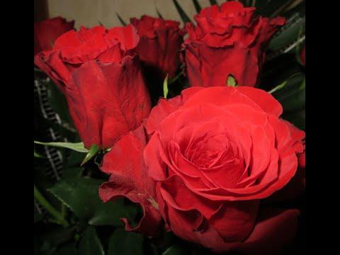 розами фото