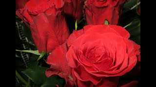 Разведение роз семенами. Розы. Советы.