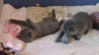 котятам 1 месяц и 3 недели