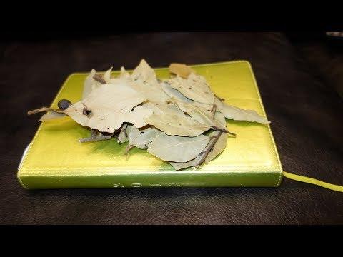 Лавровый лист для лечения тонзиллита и ангины. Как правильно лечиться отваром лаврового листа