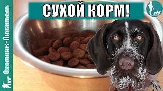 Можно ли кормить собаку сухим кормом? Охотник-Любитель