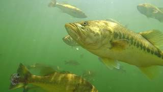 Craziest Underwater Bass Fishing Footage EVER! Whopper Plopper, Swimbait, Jerkbait, Fluke, Topwater