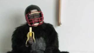 Che testa dura questa scimmia! Ma alla fine capisce sicuro!