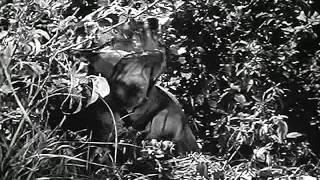 Sniper   учебный фильм люфтваффе 1940 год.