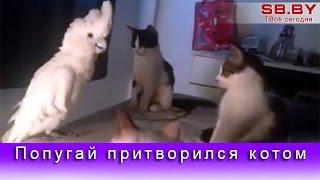 Попугай притворился котом