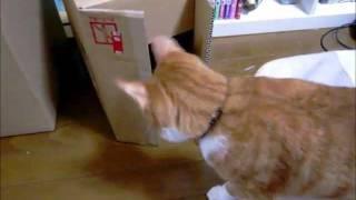 新しい箱を置いてみました。 茶太郎がすかさず入っていきました。 取り...