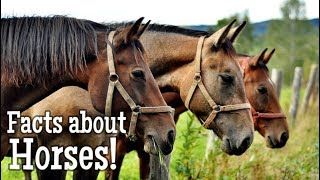 Horse Facts for Kids