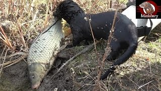 Black Mamba Catching Big Fish | Episode 9- Black Mamba: Born to Hunt