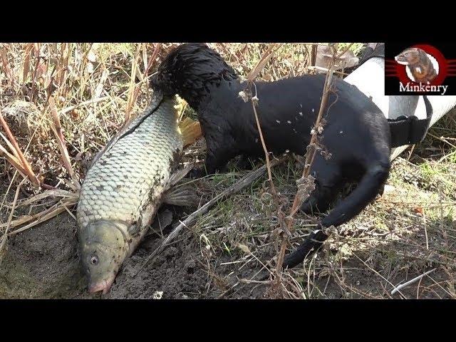 episode-black-mamba-catching-big-fish-black-mamba-born-to-hunt