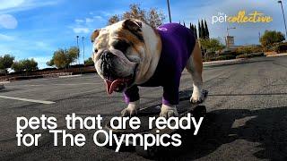 Olympian Animals