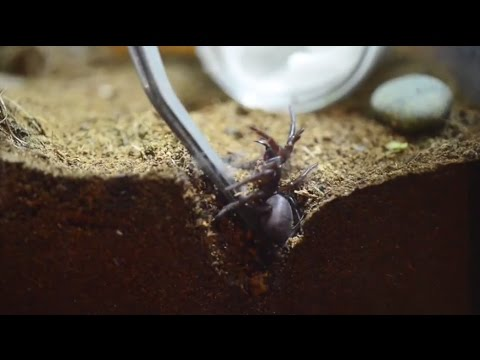 Spiders – Alive & Deadly