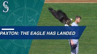 Bald eagle lands on Paxton during anthem