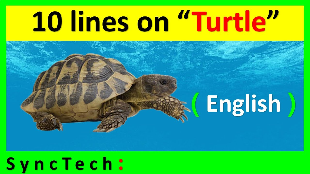 Essay writing on turtle popular application letter proofreading sites gb
