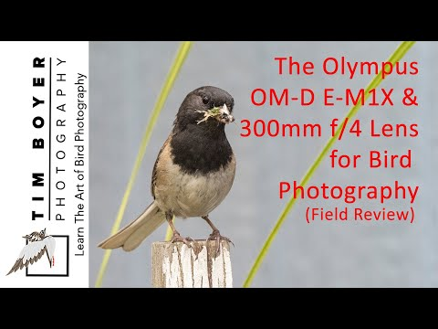 Field Review Olympus OM-D E- M1X and 300mm f/4 Pro Lens For Bird PHotographers
