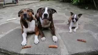 Собака украла сосиски