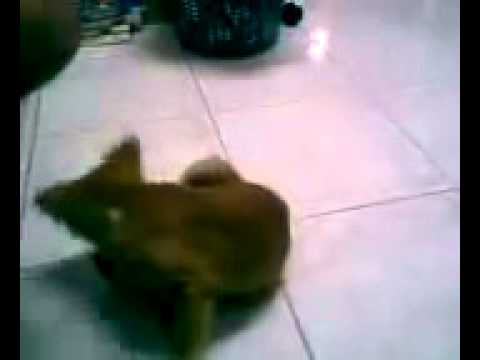 Crazy Funny Dog