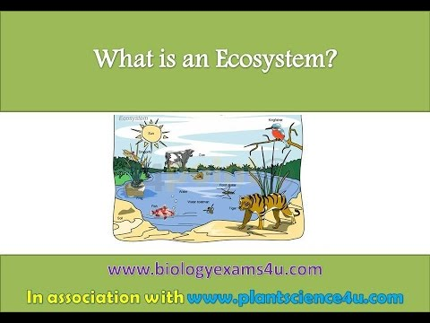 What is an Ecosystem - YouTube