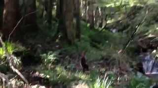 マイナスイオンを感じて、走り抜ける甲斐犬 富美子です。