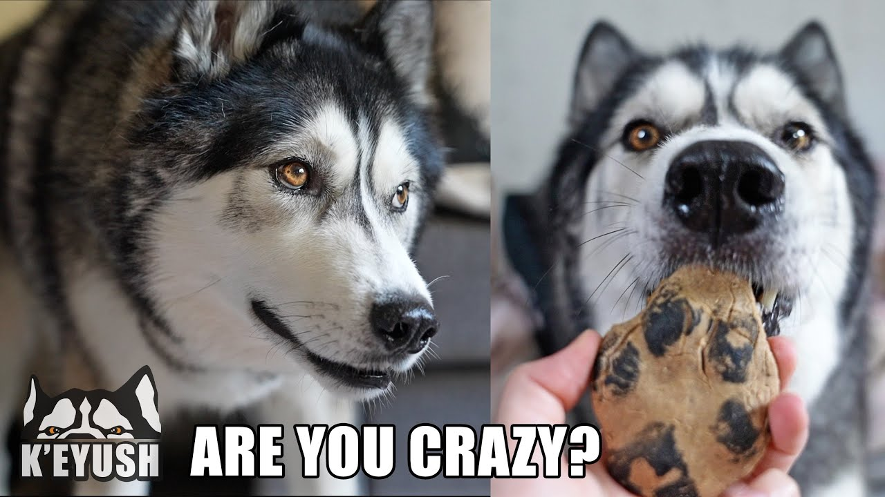 Told My Husky I Turned His PAW to FOOD! He's SHOOK!