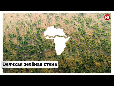 Африканские страны объединились, чтобы с помощью деревьев остановить Сахару