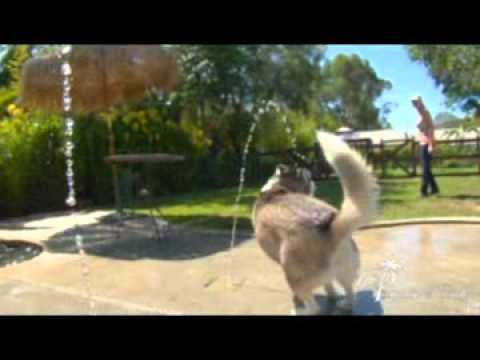 Paradise ranch pet resort dog boarding los angeles youtube for Dog kennels los angeles
