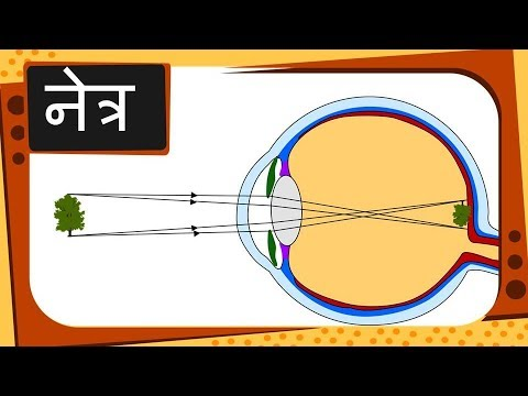 Physics – नेत्र Part 1 – How eye works – Hindi
