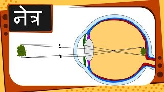 Physics – नेत्र Part 1 – How eye works – Hindi