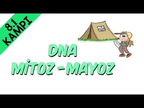 8.Sınıf Fen - DNA & Mitoz-Mayoz | 8.1 Kampı