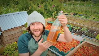 How To Grow Strawberries For Self-sufficiency