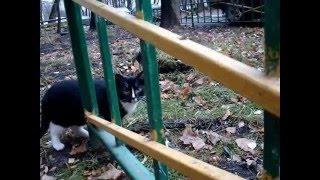 Кот решил подойти поближе