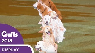 Southern Golden Retriever Display Team | Crufts 2018