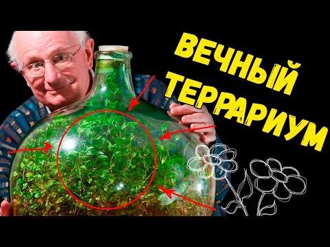 Вечный террариум своими руками / террариум в банке / мини сад