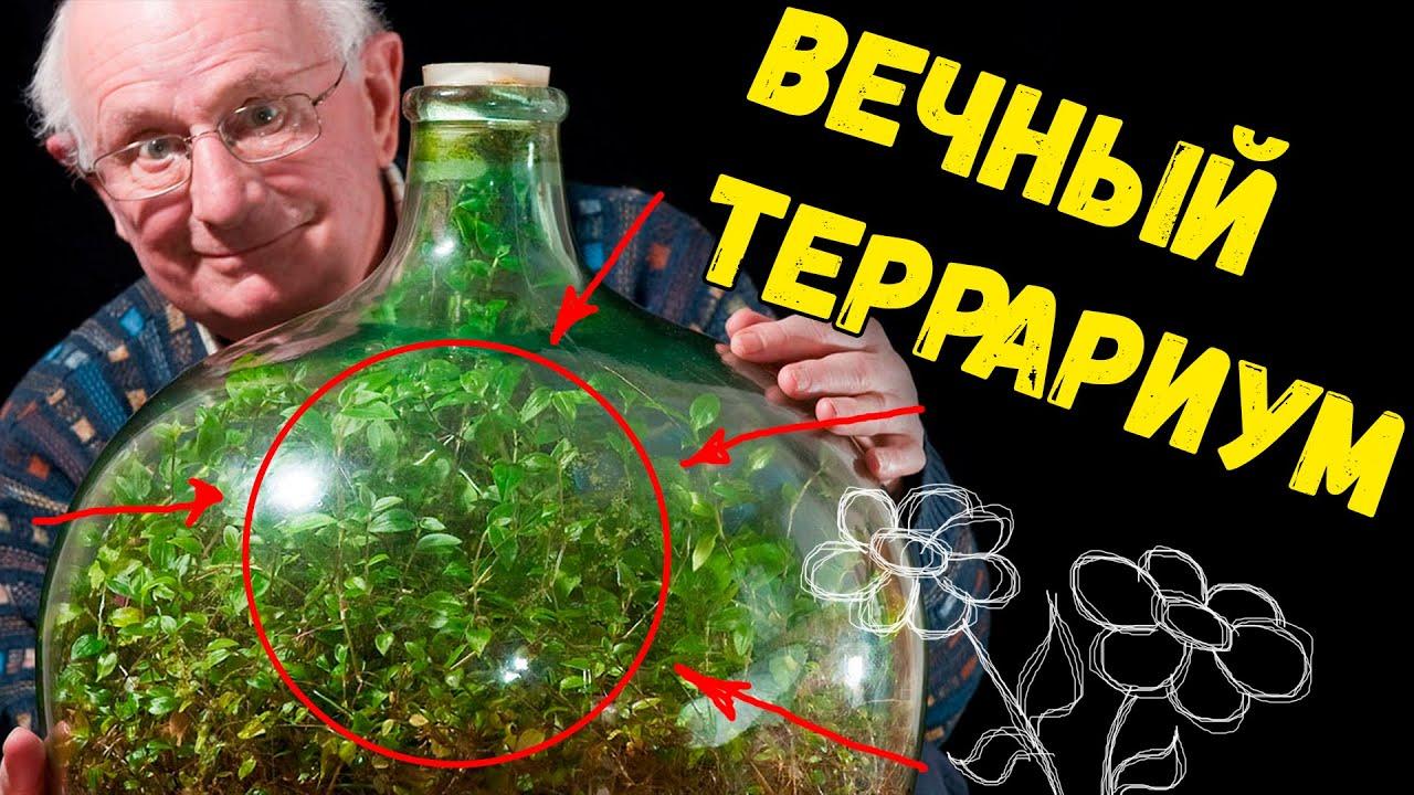 Вечный террариум в банке своими руками