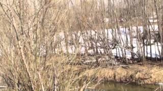 Иван Бунин «Бушует полая вода»