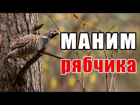 Как манить рябчика манком осенью